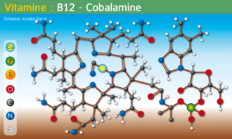 http://didaquest.org/w/images/thumb/0/06/Molecule_Vitamine-B12.png/330px-Molecule_Vitamine-B12.png